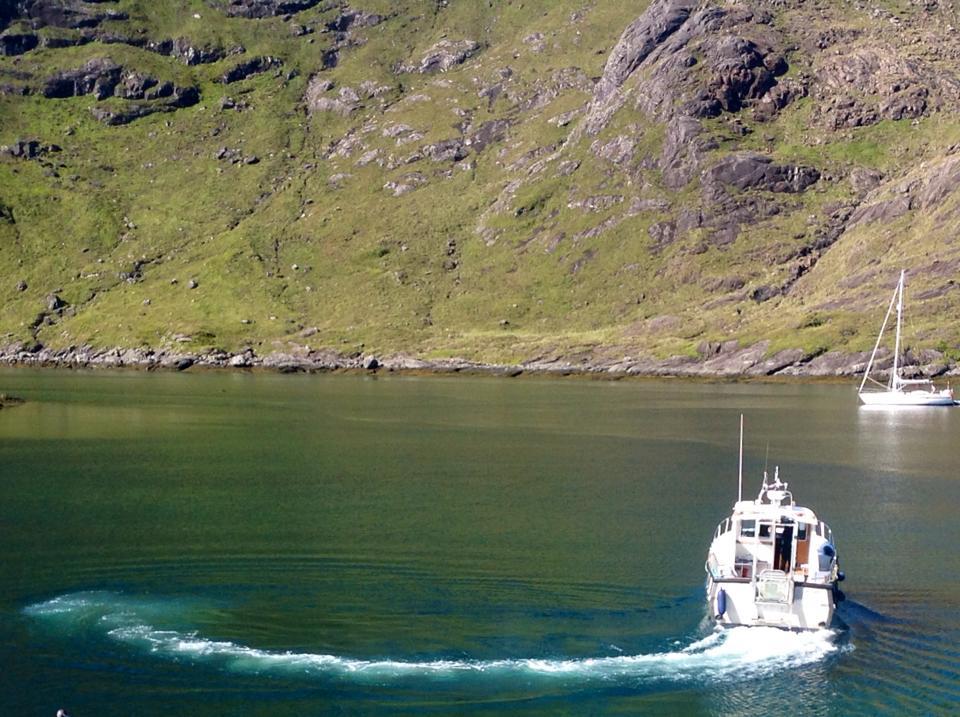 Salida para el avistamiento de focas, lobos marinos, aves