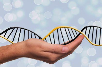 El departamento de Genética del centro aplica el Diagnóstico Genético Preimplantacional para seleccionar los embriones sanos antes de ser transferidos al útero materno.